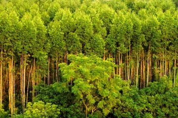 Forest in Southeast Asia